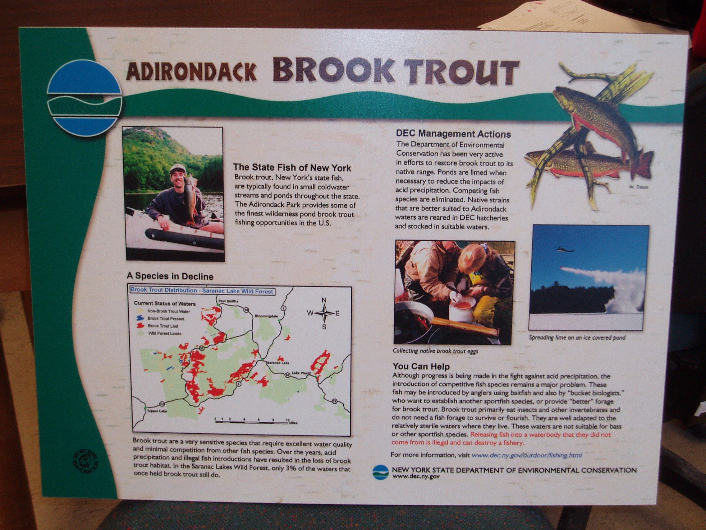 trout info