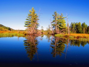 Reflections on Marion River